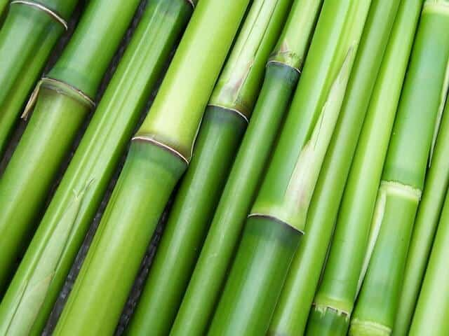 Bamboo for making bedding materials